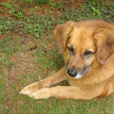 Flo the best dog, Sony DSC-L1