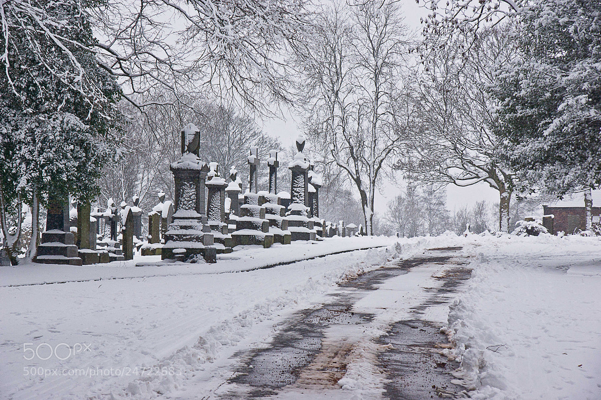 Photograph Path in the cemetery after snow fall by Steve Riley on 500px