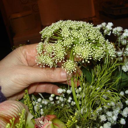 Flowers, Sony DSC-L1