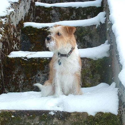 Snow-Dog, Fujifilm FinePix S304