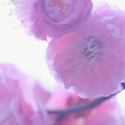 plum, Canon EOS-1D MARK III