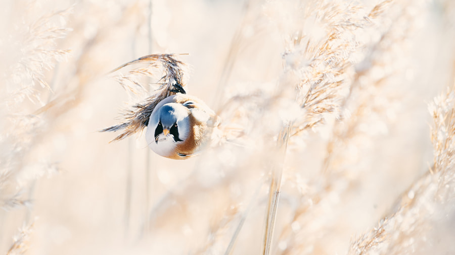 Poised to take-off by Jere Ketola on 500px.com