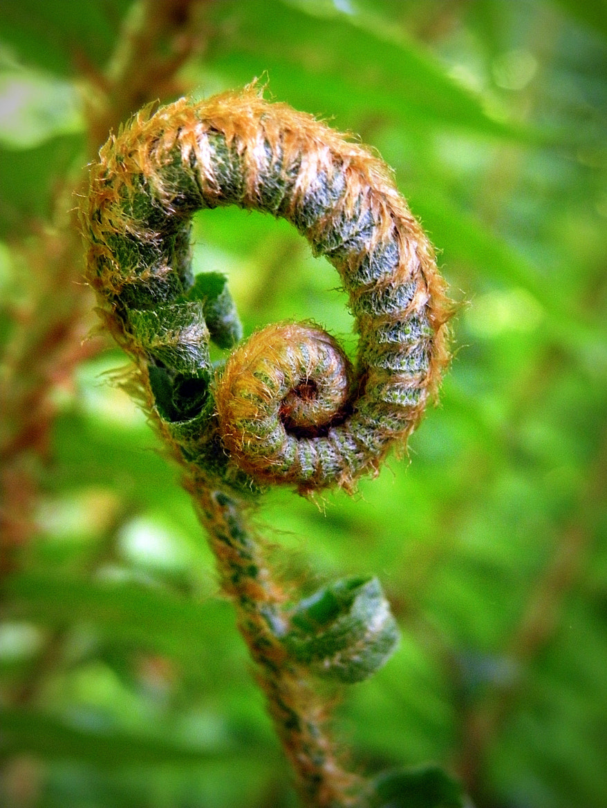 Photograph Fiddlehead by Brian Chase on 500px