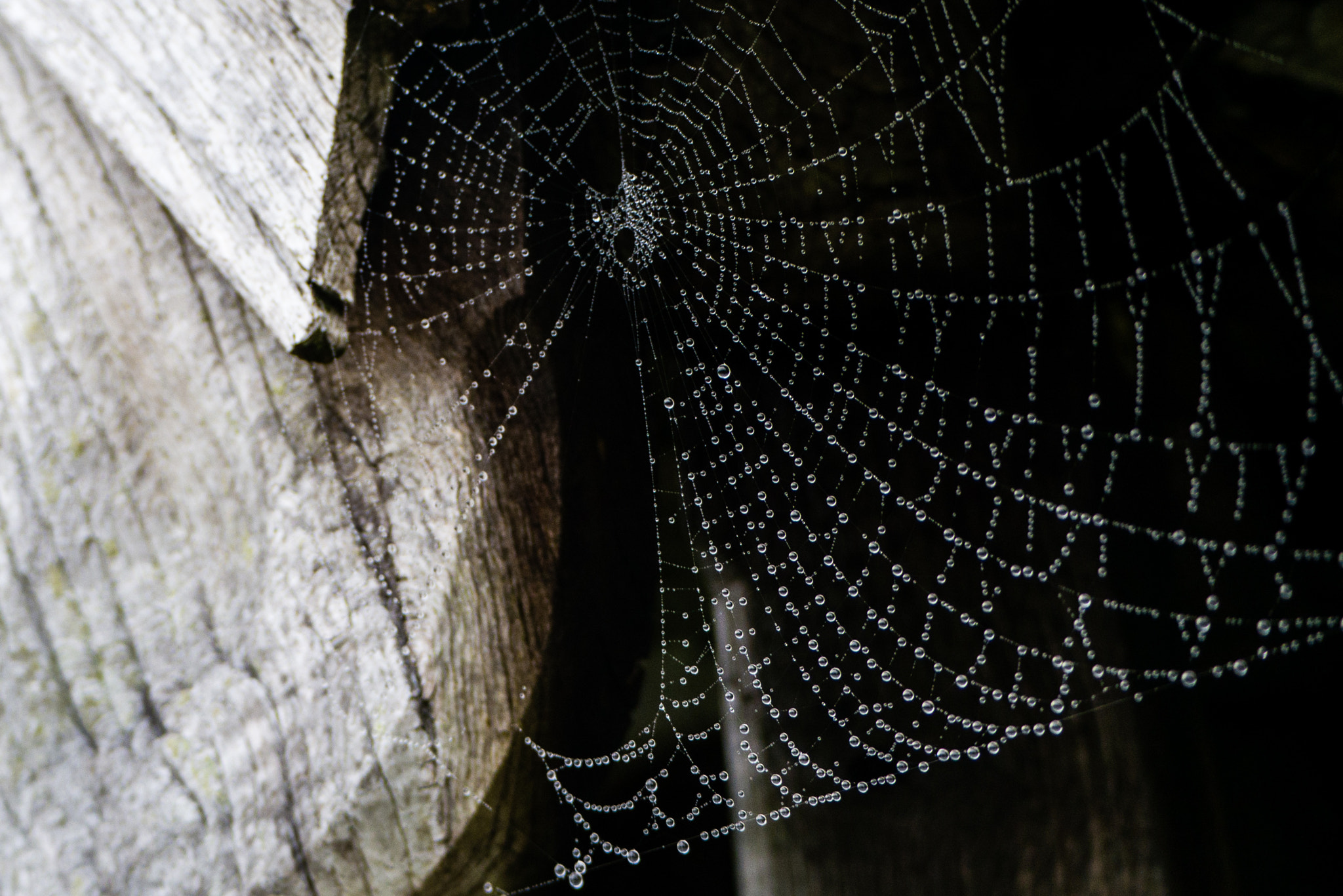 Photograph Spiderweb Pearls by Matt Goodman on 500px