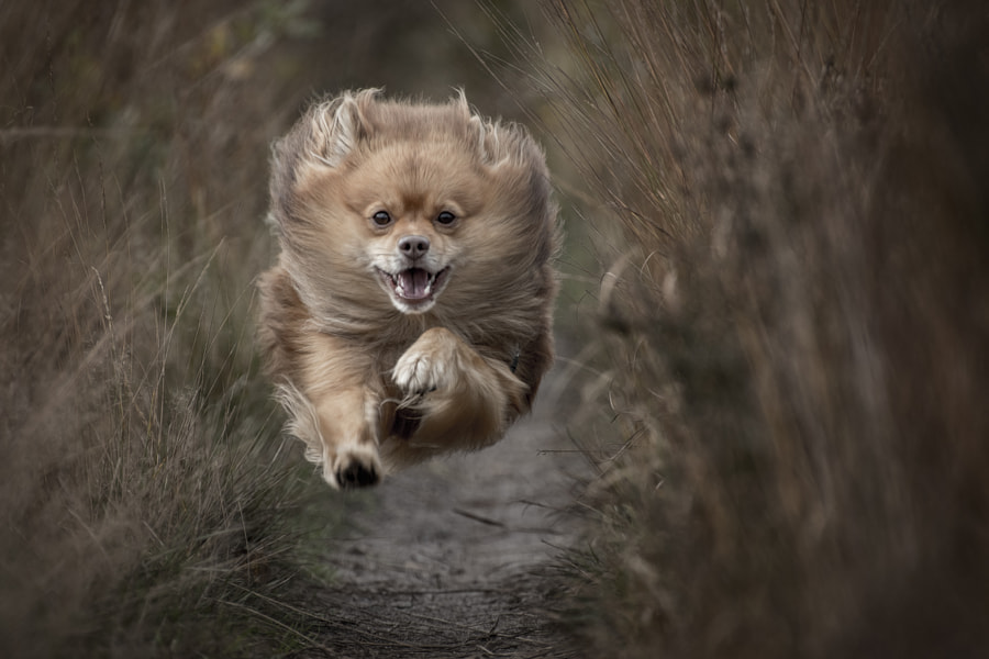 Flying dog..., автор — Ton lع Jeune на 500px.com