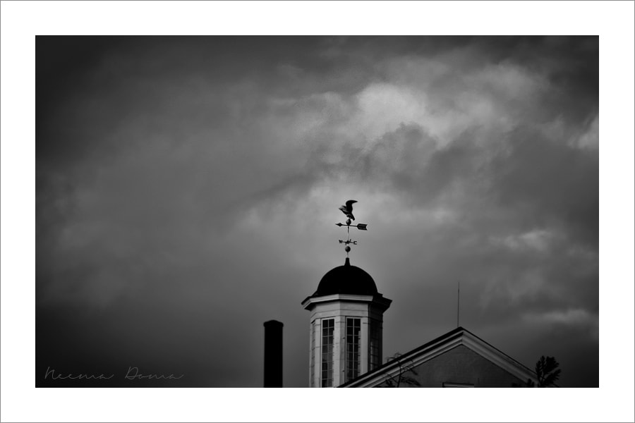 Photograph Eagle Weathervanes - stormy day by Neema Doma on 500px