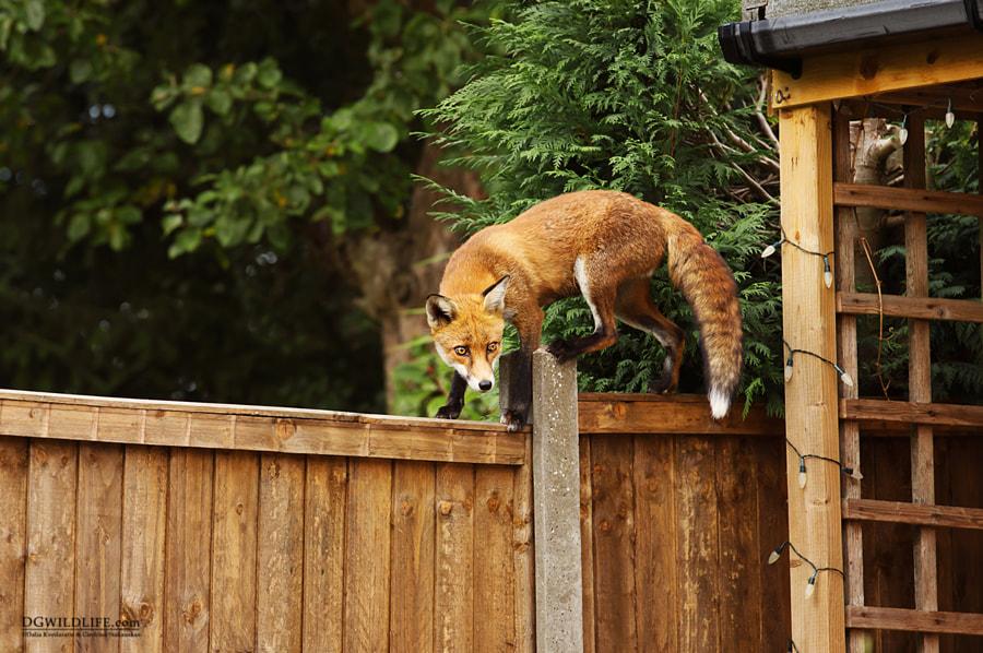 Garden Friend, автор — Dalia Kvedaraite на 500px.com