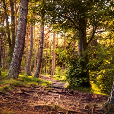 Dreamy Woods