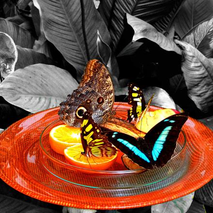 Butterflies, Sony DSC-WX200