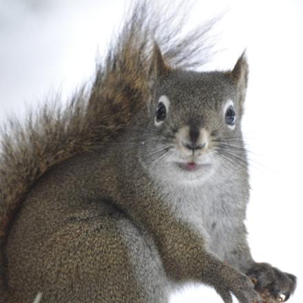 Squirrel, Nikon D90