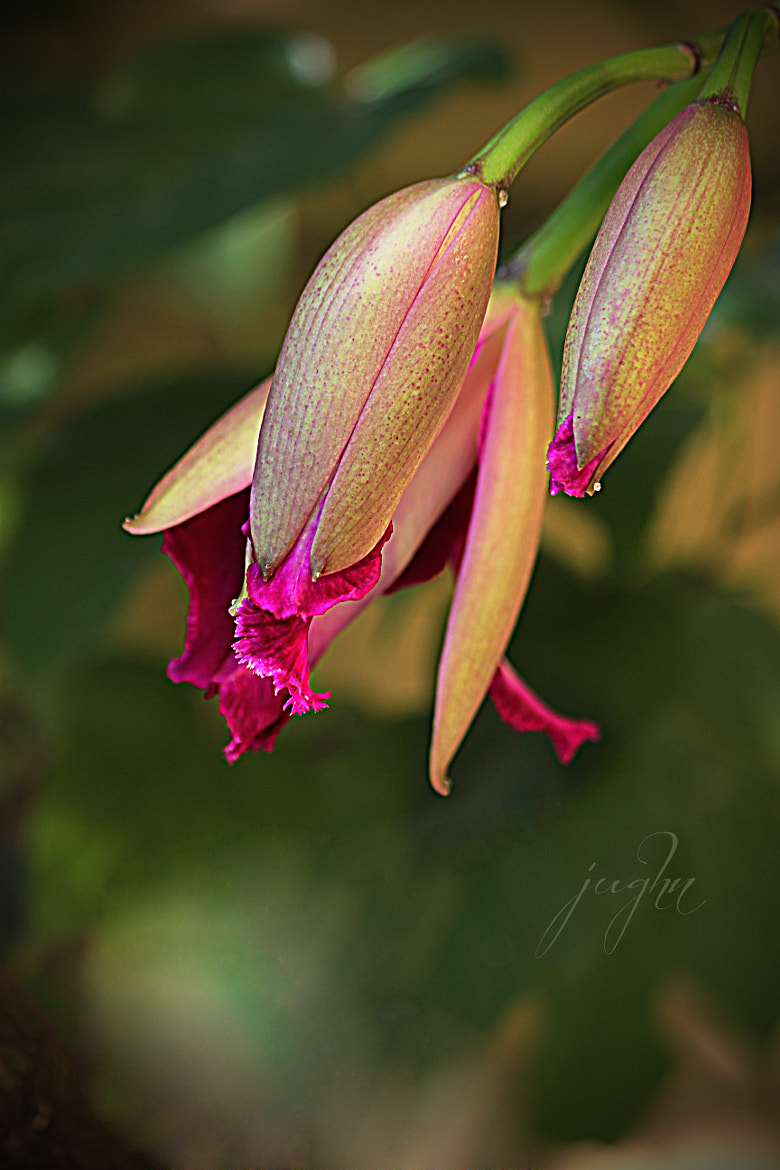 Photograph Orchid by jughnguevarra on 500px