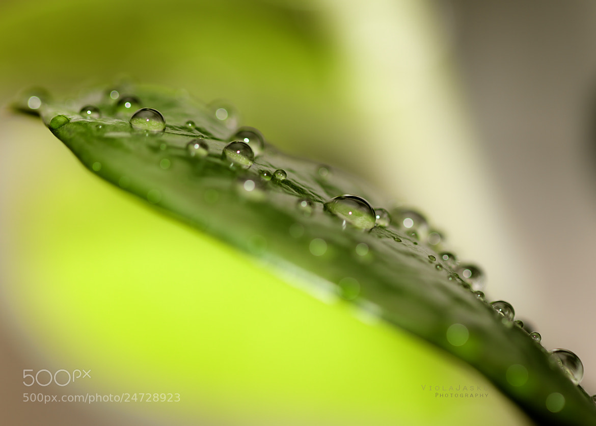Photograph Droplets by Viola Jasko on 500px