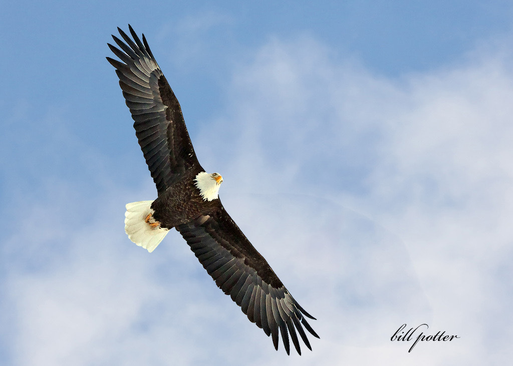 Photograph Eagle III by William Potter on 500px