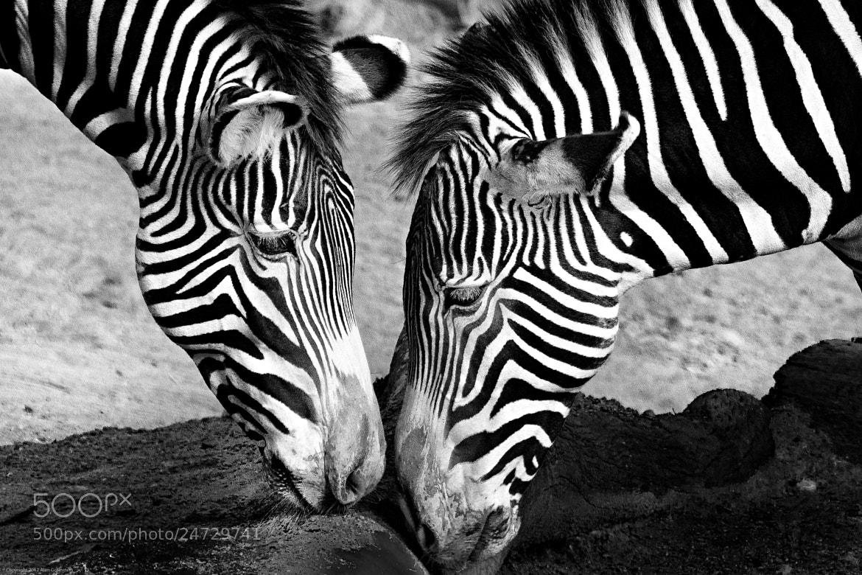 Photograph Striped Love by Alan Gorinstein on 500px