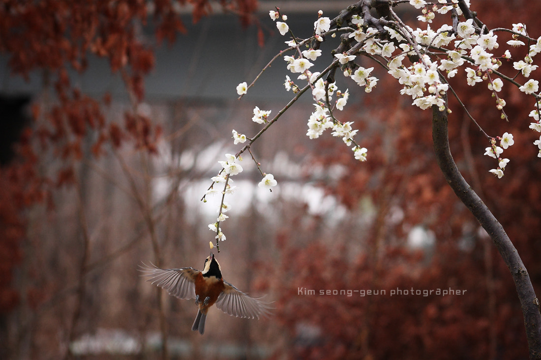 Photograph Flowers and bird by kim seong-geun on 500px