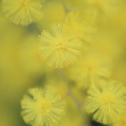 Yellow dream world, Canon EOS 5D MARK III, Tamron 90mm f/2.8