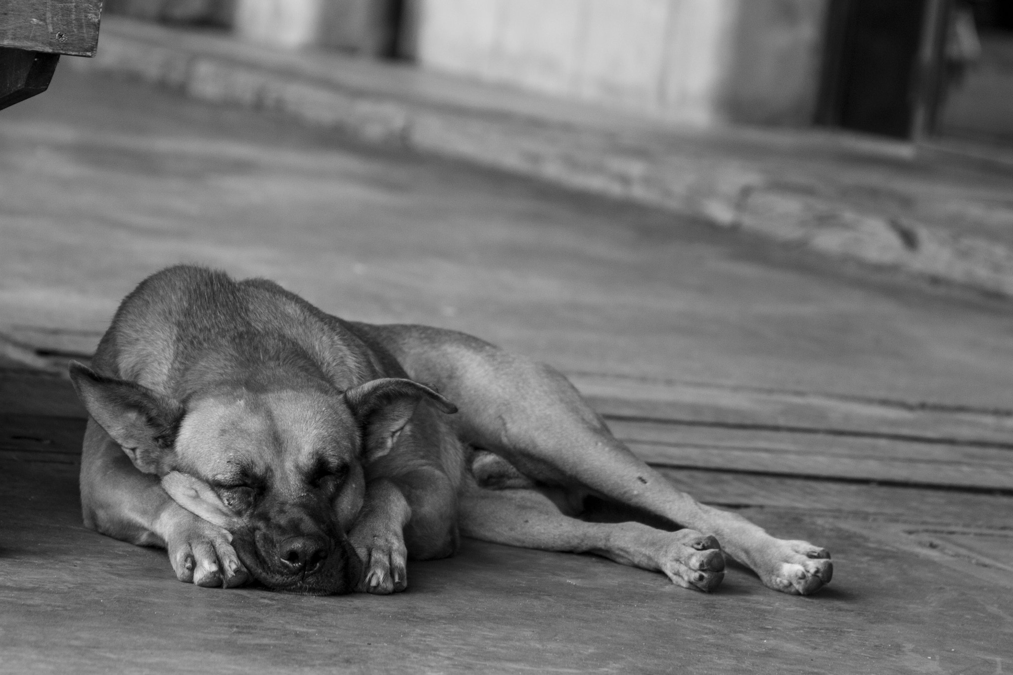 Photograph Sleepy Dog by German Lopez on 500px