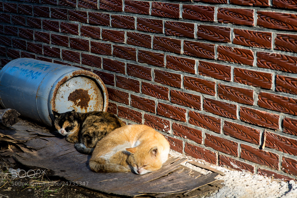 Photograph Old cat a couple by Lee Kyeong Hwan on 500px