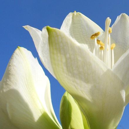 Nature poetry, Nikon COOLPIX S2600