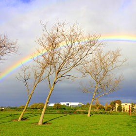 Rainbow trees ! by Gopal Kumarappan (gops)) on 500px.com