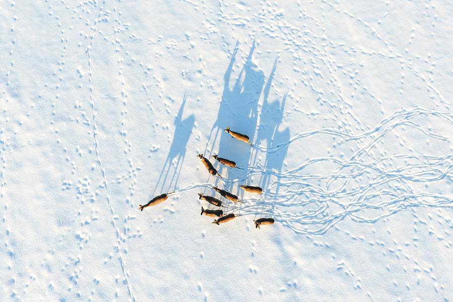 Shadows de Janek Joab en 500px.com