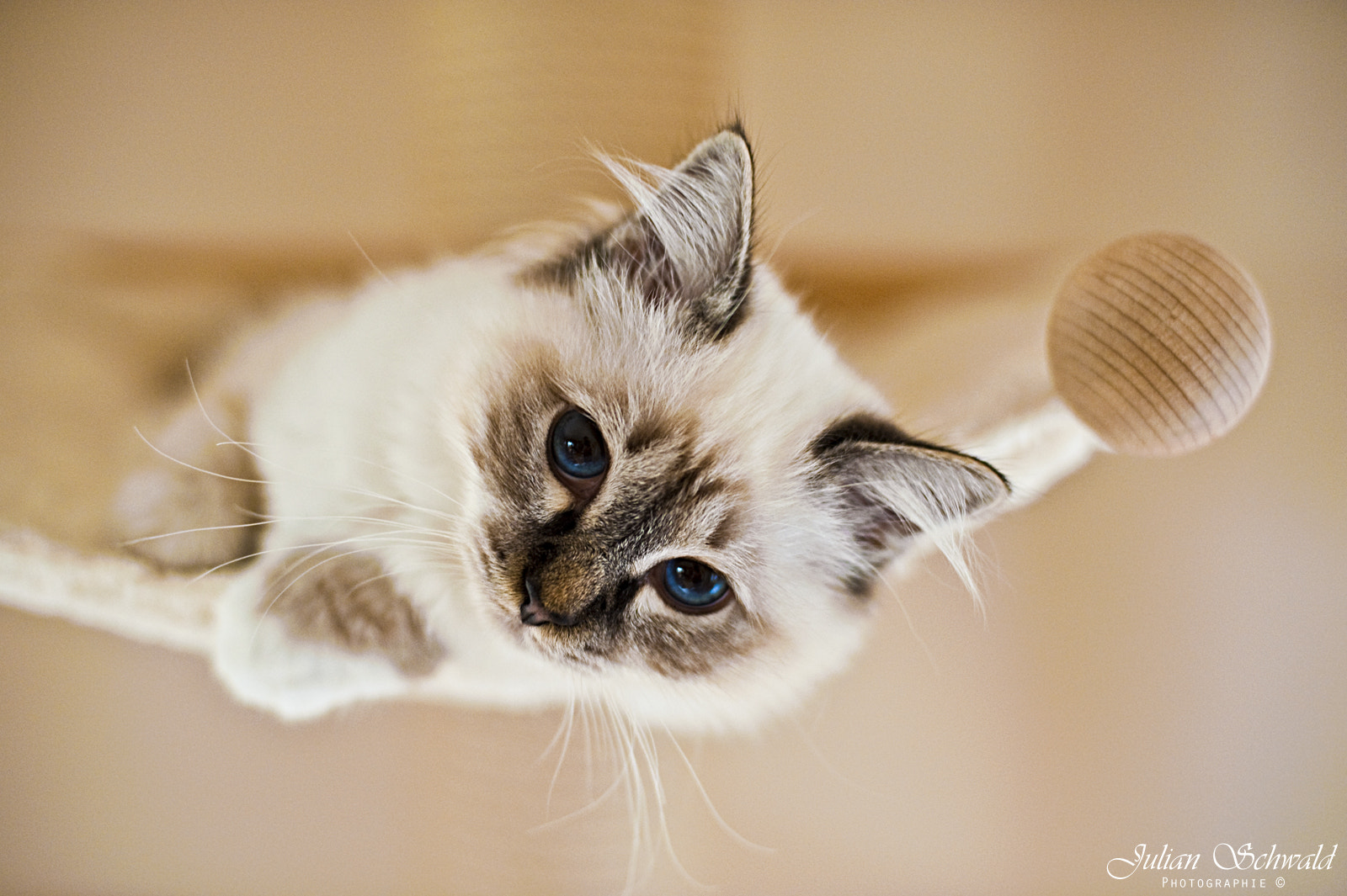 Photograph Little Cat Melodie by Julian Schwald on 500px