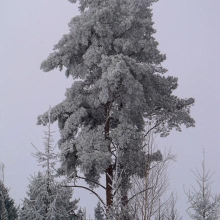 Winter Weekends, Fujifilm FinePix S1500