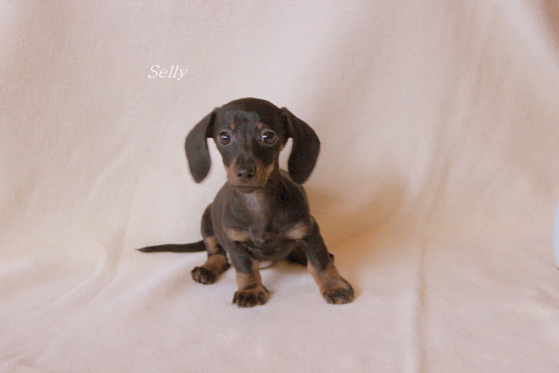 Photograph Selly ten weeks old by Marion Doescher on 500px