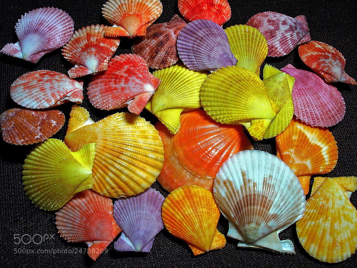 Photograph Shells by jughnguevarra on 500px