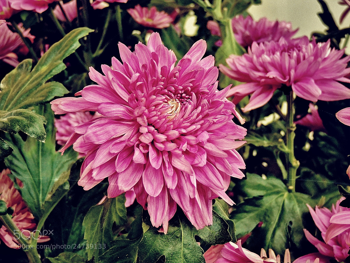 Photograph Floral by Ravi S R on 500px
