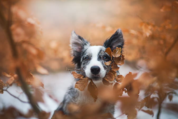 Winter or autumn?