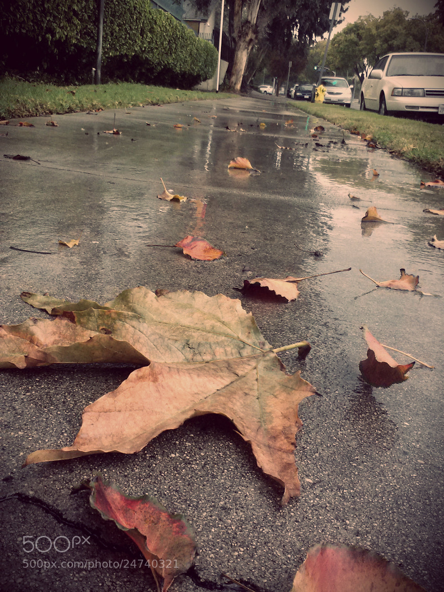 Photograph Rainy day in the fall by Sheri Yousefi on 500px