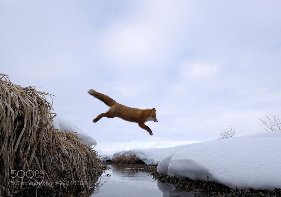 Photograph Flying fox. by Igor Shpilenok on 500px