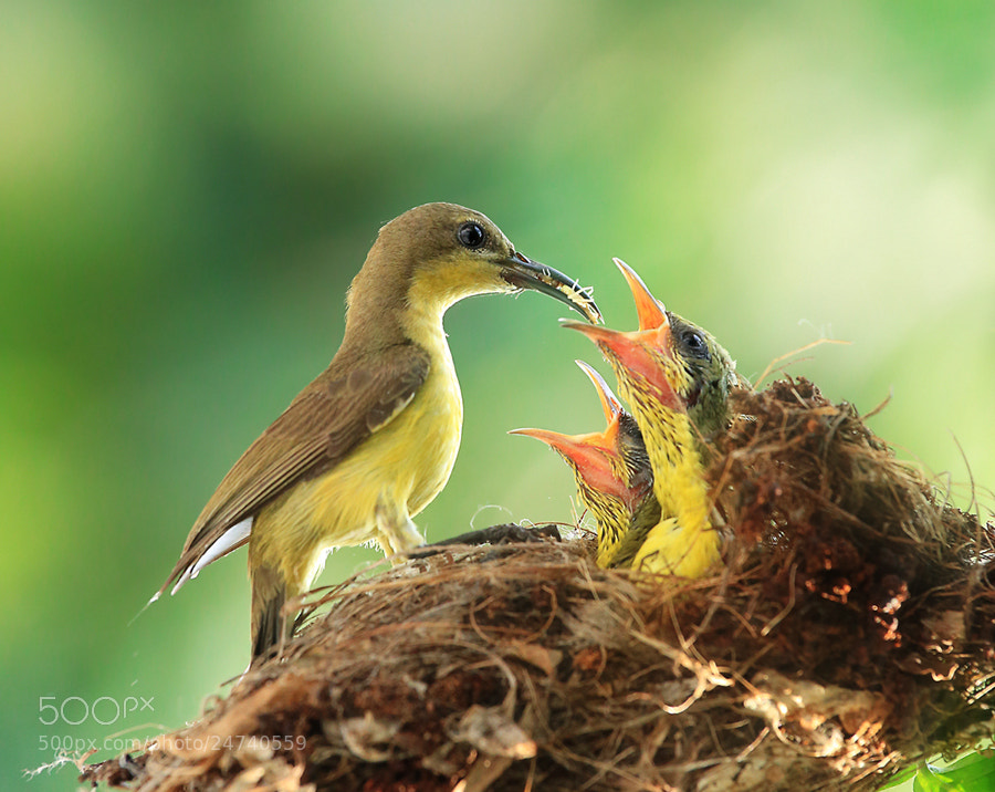 Photograph Feeding with love by Prachit Punyapor on 500px