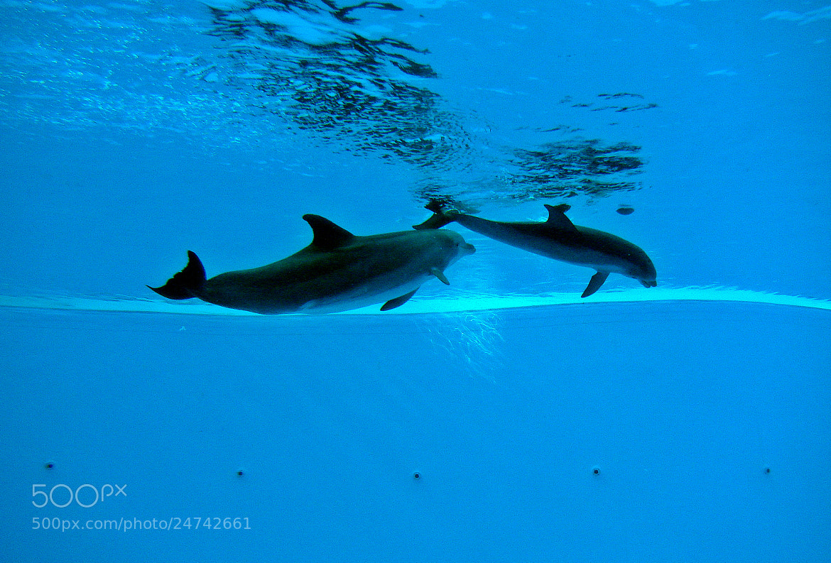 Photograph Swim with the Dolphins by Evan Vis on 500px