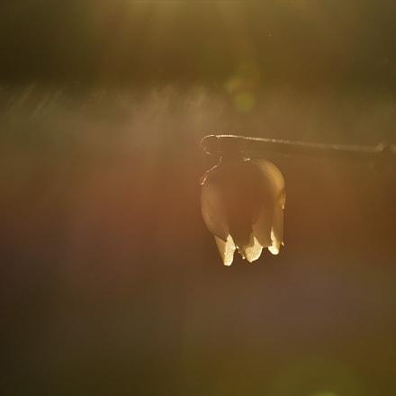 Sun flare 3, Nikon D750, AF Zoom-Micro Nikkor 70-180mm f/4.5-5.6D ED