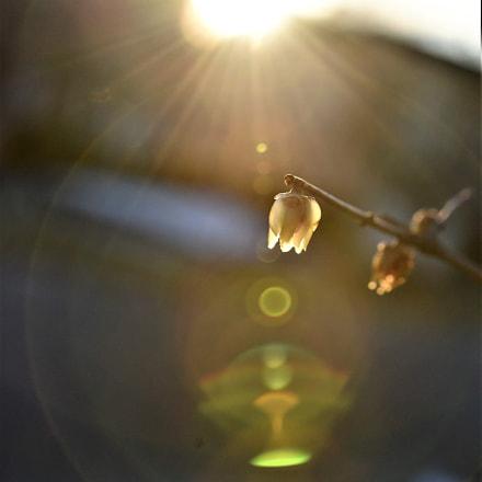 Sun flare 2, Nikon D750, AF Zoom-Micro Nikkor 70-180mm f/4.5-5.6D ED