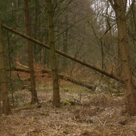 Overturn fallen Trees, Pentax K10D, Sigma 70-300mm F4-5.6 Macro
