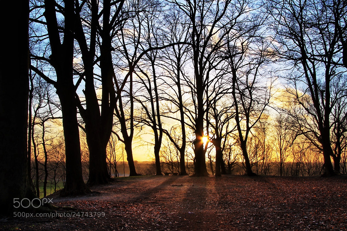 Photograph Peaking trough the trees by Joost Lagerweij on 500px