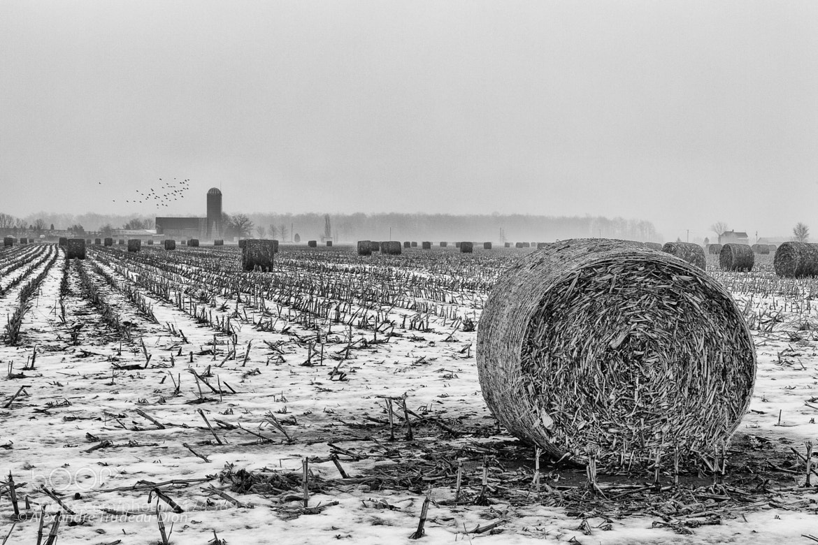 Photograph Snowy field by Alexandre Trudeau-Dion on 500px