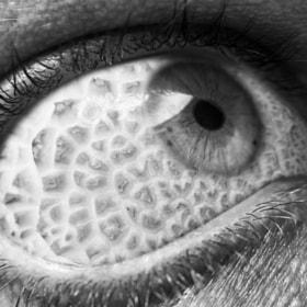 Ephemeral visualizations | Mushroom