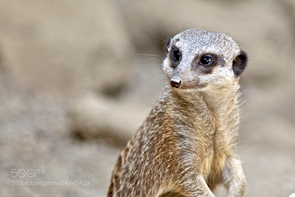 Photograph Are you looking at me ? by Christophe Pfeilstücker on 500px