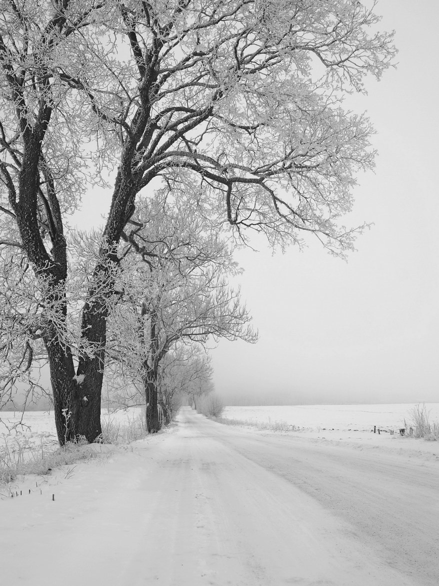 Photograph country winter road by Algirdas Markevicius on 500px