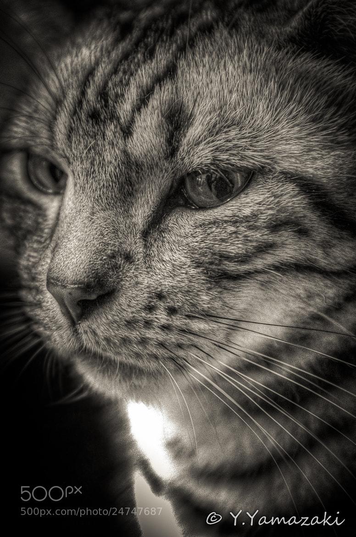 Photograph Sadness by Youhei Yamazaki on 500px