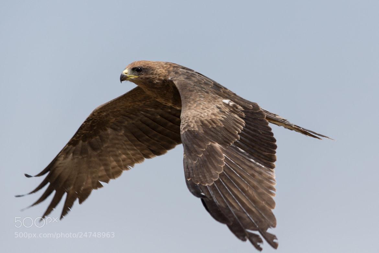 Photograph Amora in flight by Dereje Belachew on 500px