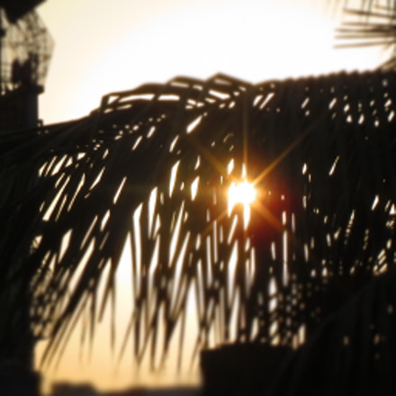 Behind The Coconut Leaves  ...., Canon IXUS 510 HS