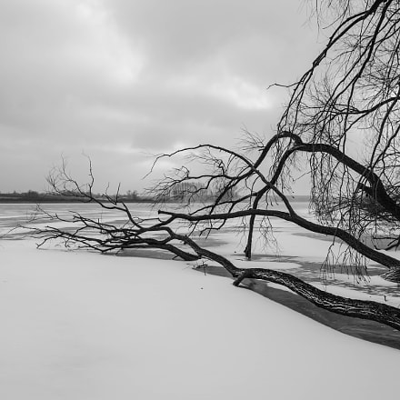 Dead trees on the lake