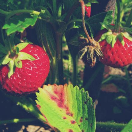 Strawberry Monday, Canon POWERSHOT A480