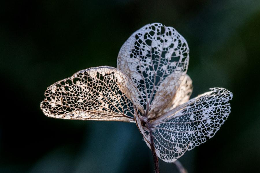 Comme un papillon ( Like a butterfly) de Christine Druesne sur 500px.com