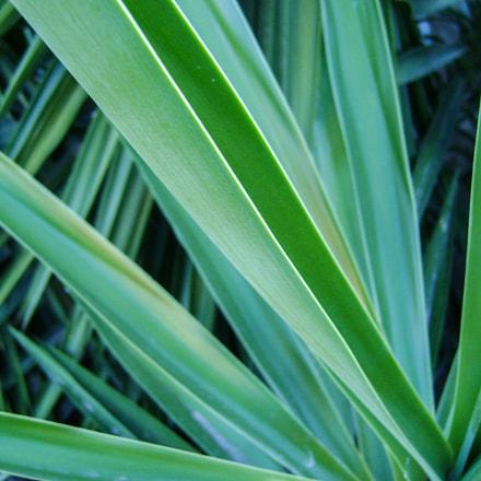 green, Sony DSC-S730